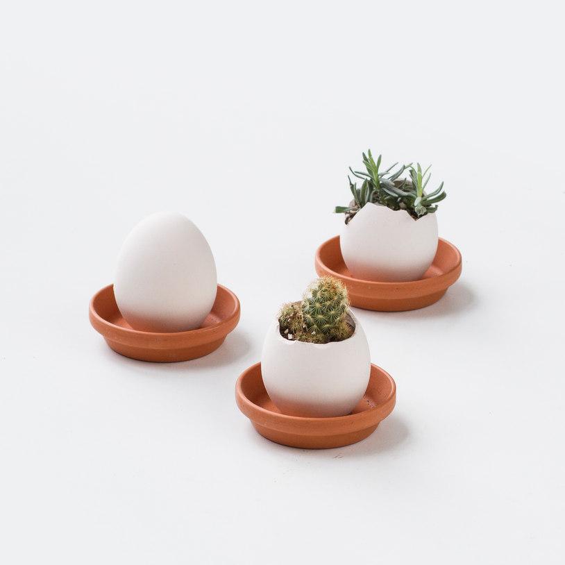 Egglings (Cactus) 3